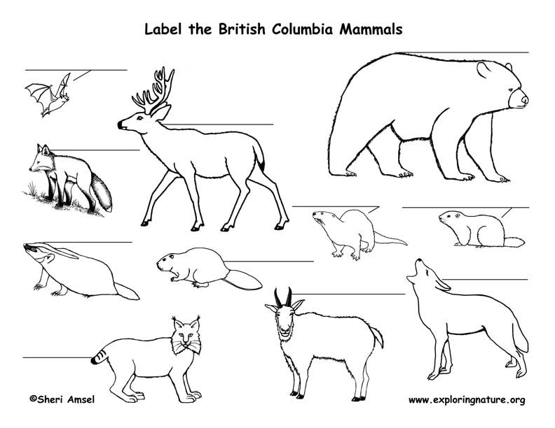 Canadian Province British Columbia Mammals Labeling Page With