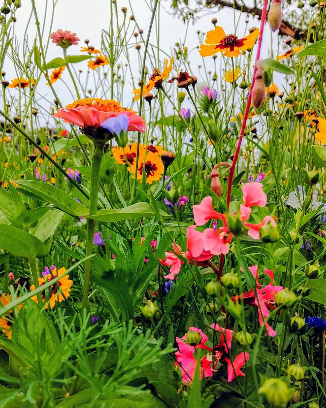 Pin Von Lena Broking Auf Garten Wildblumenwiese Blumen Wiese Wildblumen Wiese