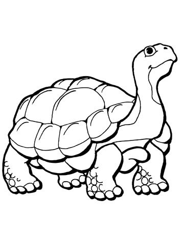 Tortoise Coloring Page Turtle Coloring Pages Animal Coloring