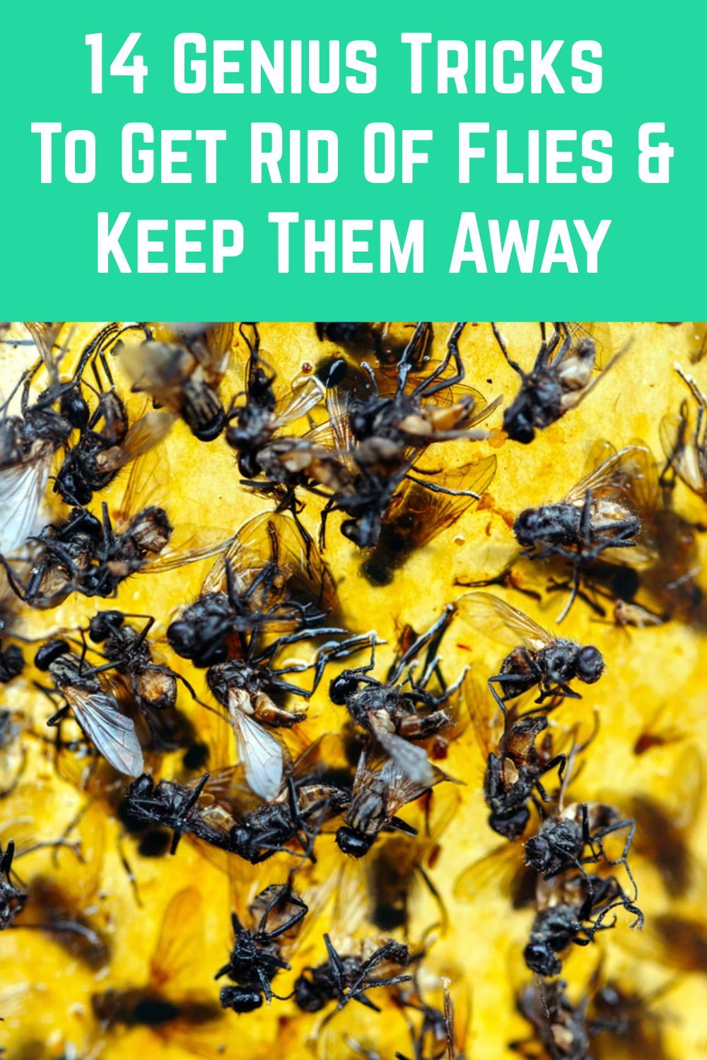 How To Get Rid Of Flies Outside In The Yard