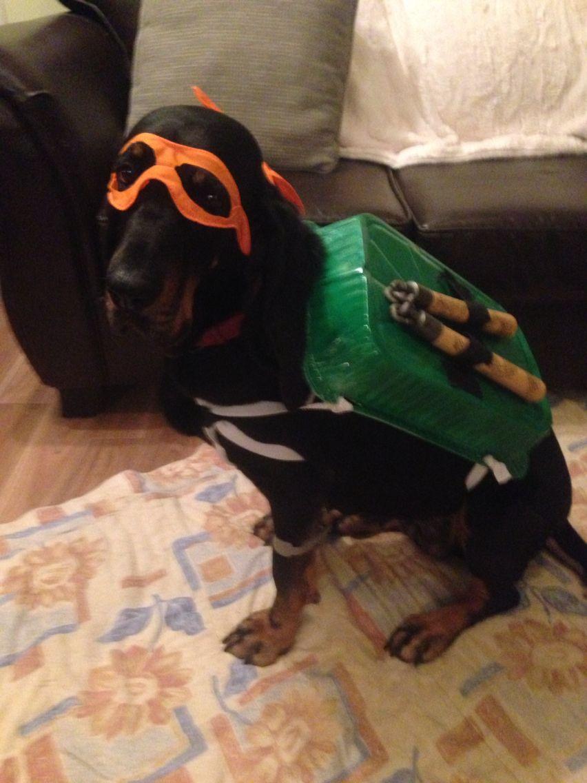 Diy Dog Costume Ninja Turtle Diy Dog Costumes Diy Dog Stuff