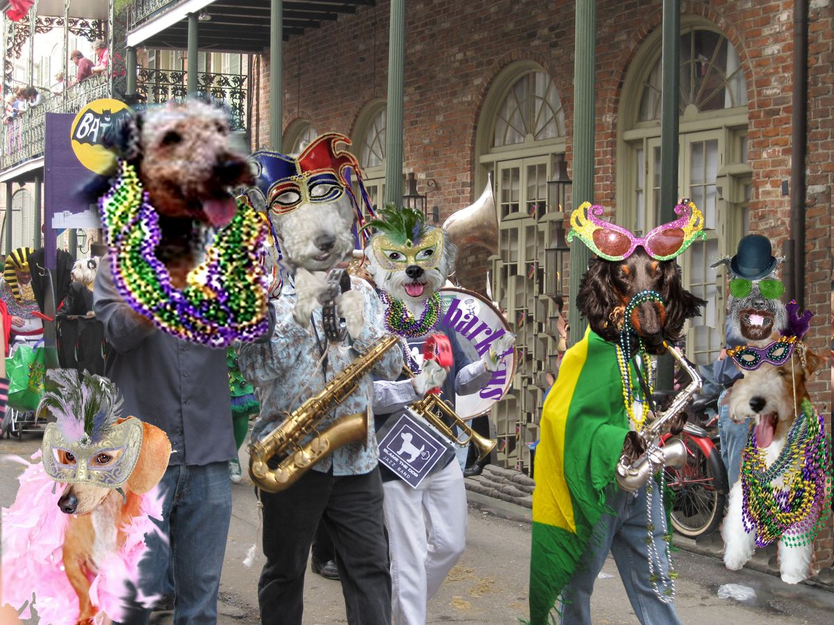 mardi gras dog | Finally on the stweet mowe Fwiends stawted coming..The Glamouwous Miss ...