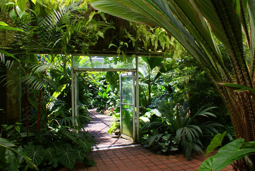 Explore The Rare Plant House And Tropical Plant Conservatory At Fairchild Garden Fairchild Tropical Botanic Garden Tropical Plants Tropical Garden