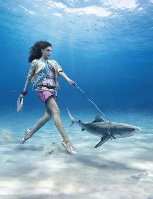 Pet shark haha maybe for the mermaids for Shark fish pet