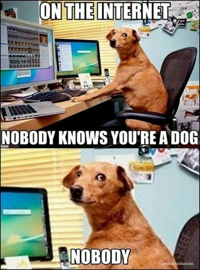 Internet Safety For Kids Cause You Never Know Funny Dog Memes Funny Animal Pictures Funny Dogs