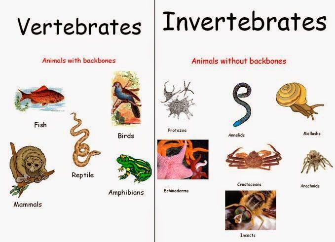 Biology of invertebrates pechenik 6th edition