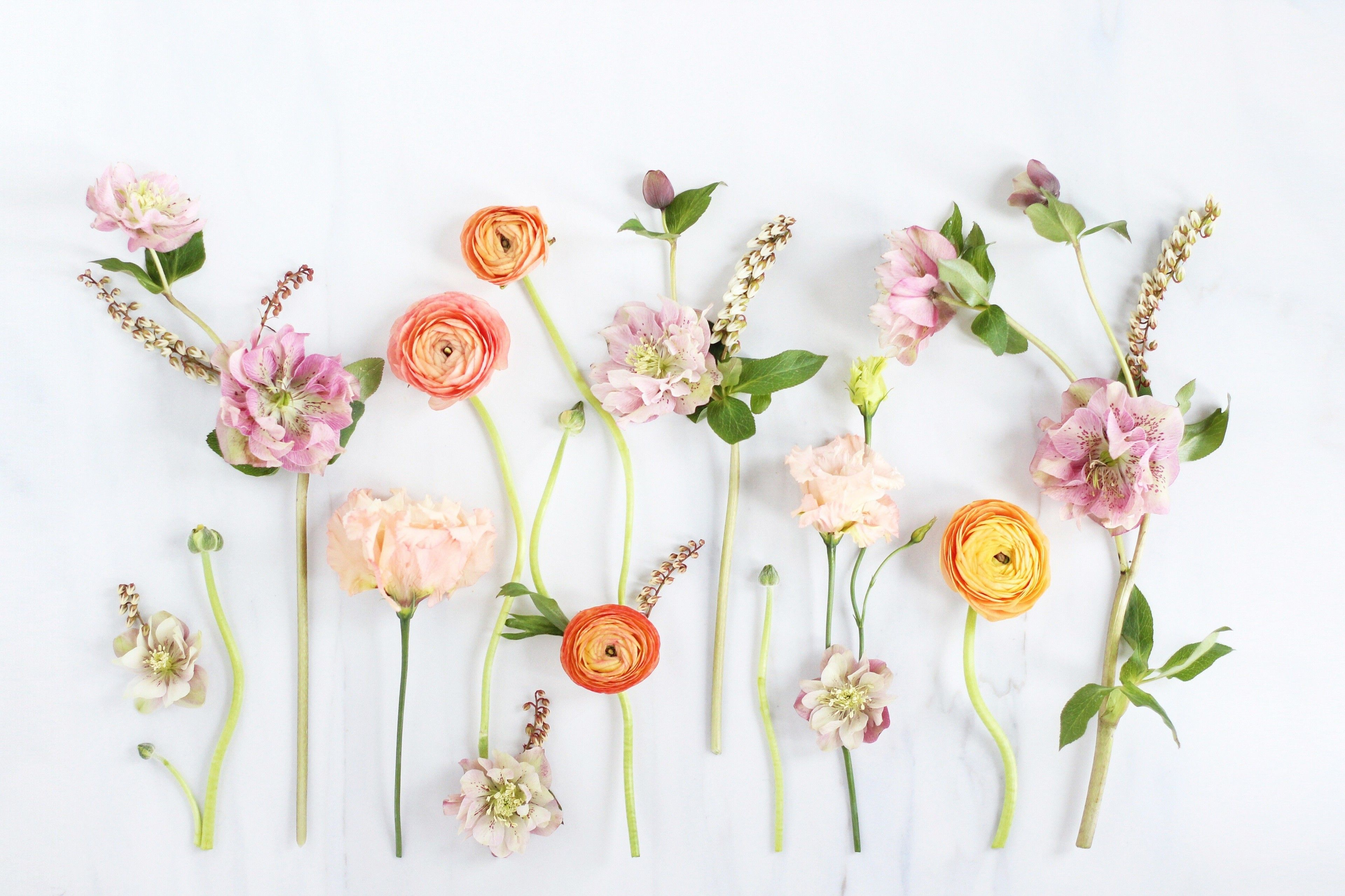 Simple Flowers On The Wall Hd Spring Wallpaper Beautiful Flowers And Floral Wallpaper Desktop Flower Desktop Wallpaper Computer Wallpaper Desktop Wallpapers