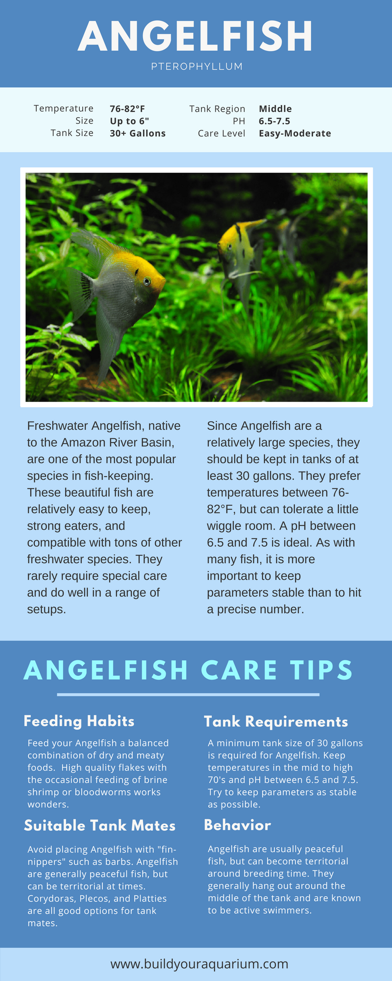 Pin By St3v3npin5 On Aquariuminfo Pinterest Angelfish And