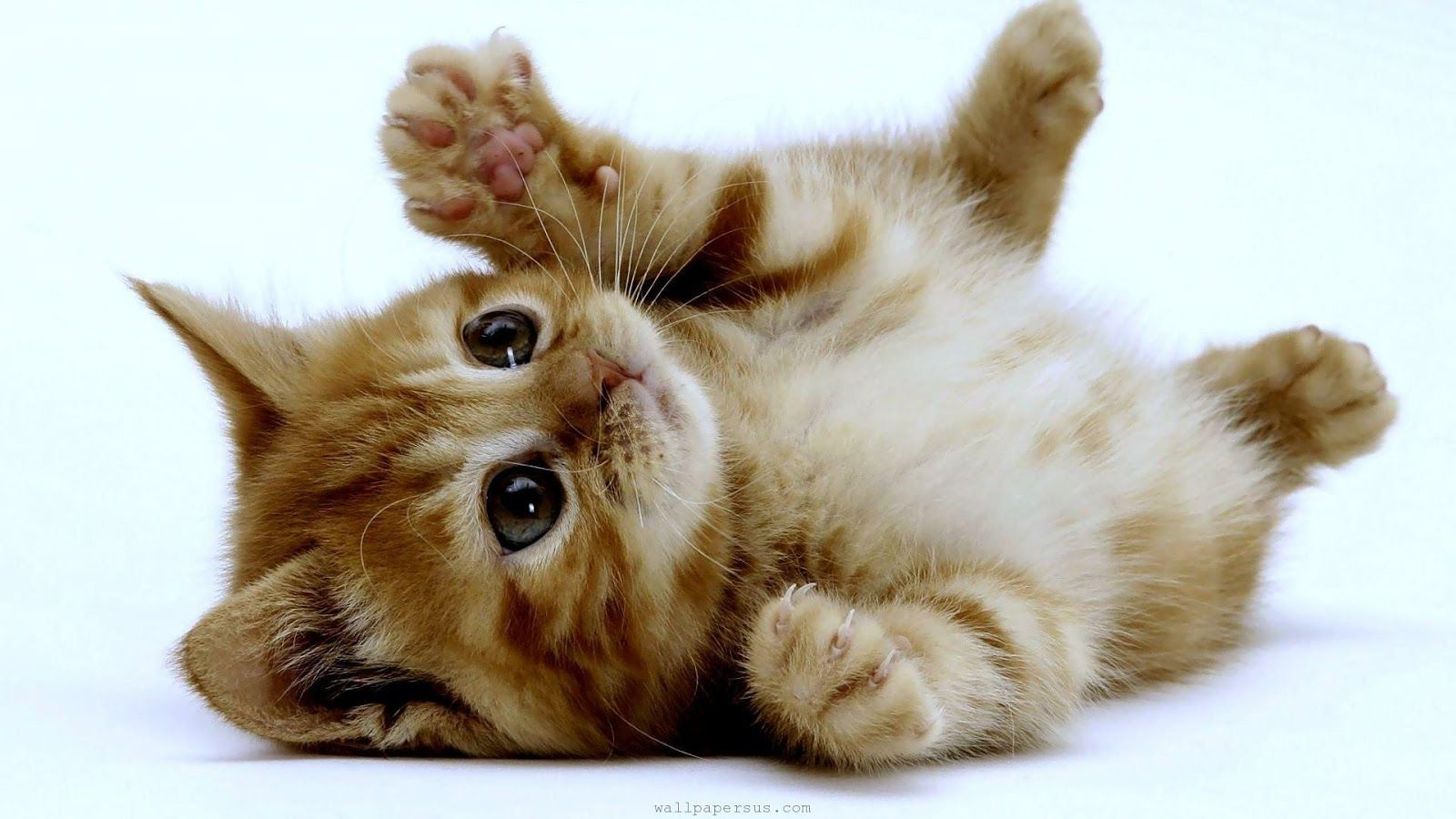 Cute kitten wallpapers hd android apps on google play adorable cute kitten wallpapers hd android apps on google play thecheapjerseys Gallery