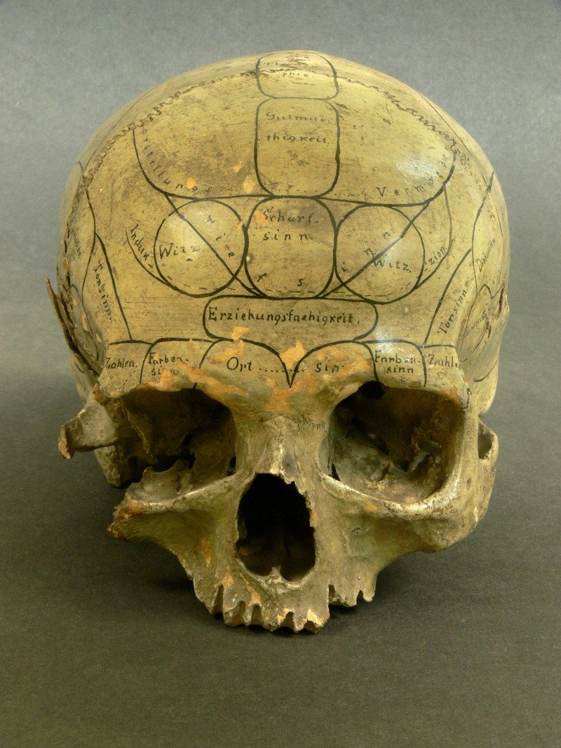 Human skull inscribed by a phrenologist.