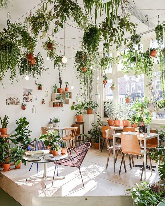 pinterest ↠ emmaberi decoracion Pinterest Plantas, Jardinería - Decoracion De Terrazas Con Plantas