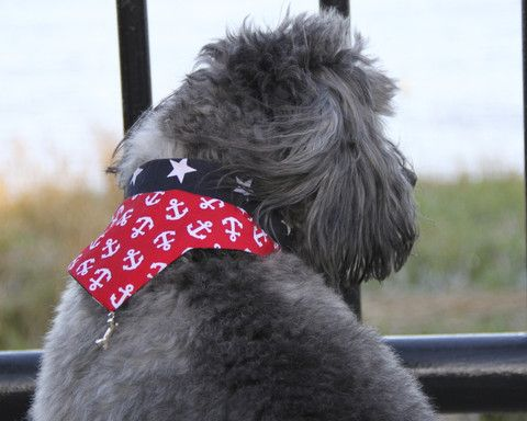 Portobello Pup Dog Bandana Cambridge Handmade In London This