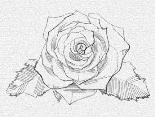 картинки роза карандашом