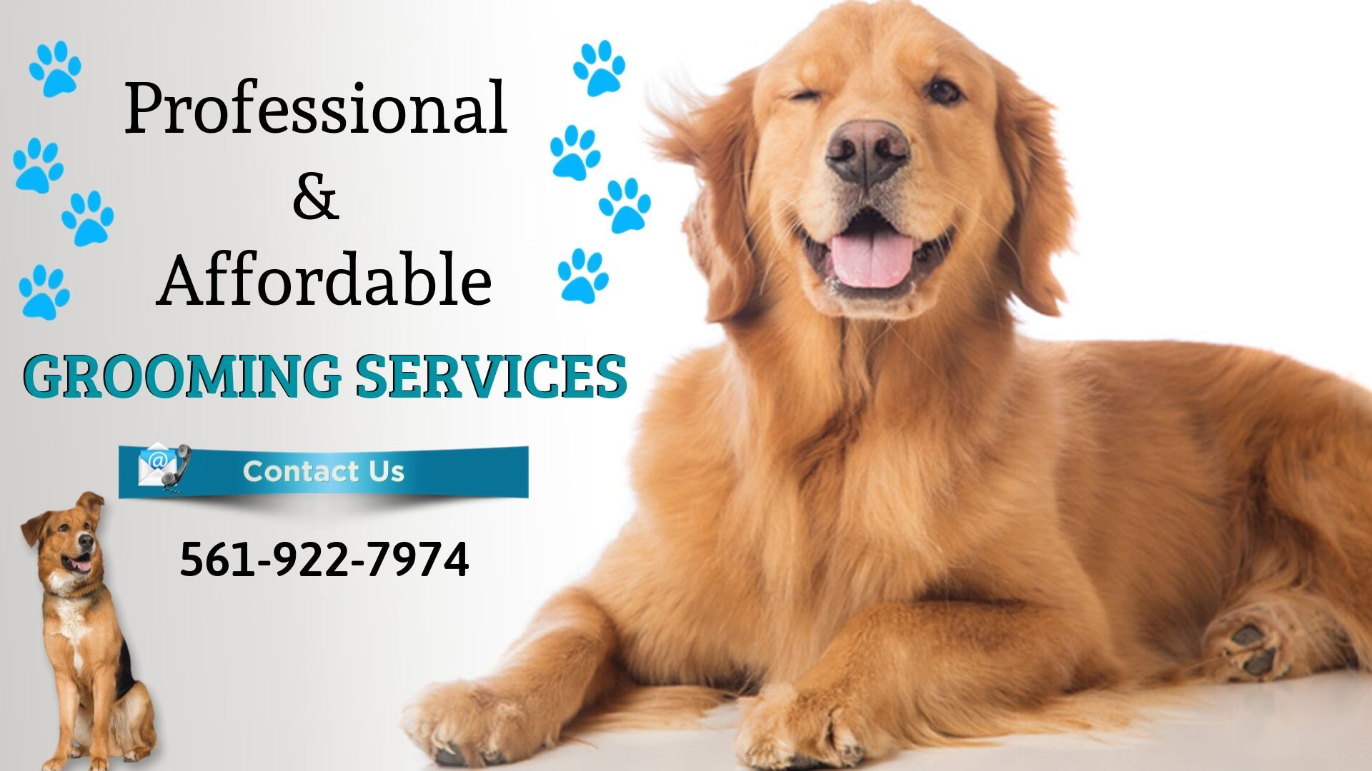 Dog Grooming Services Near Boca Raton Fl Healthy Pets Dog Grooming Grooming