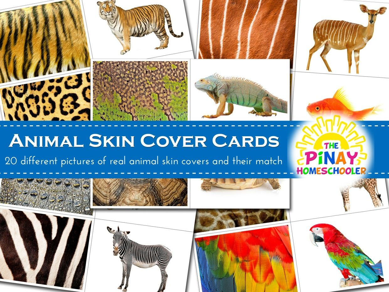 Animals And Their Covers