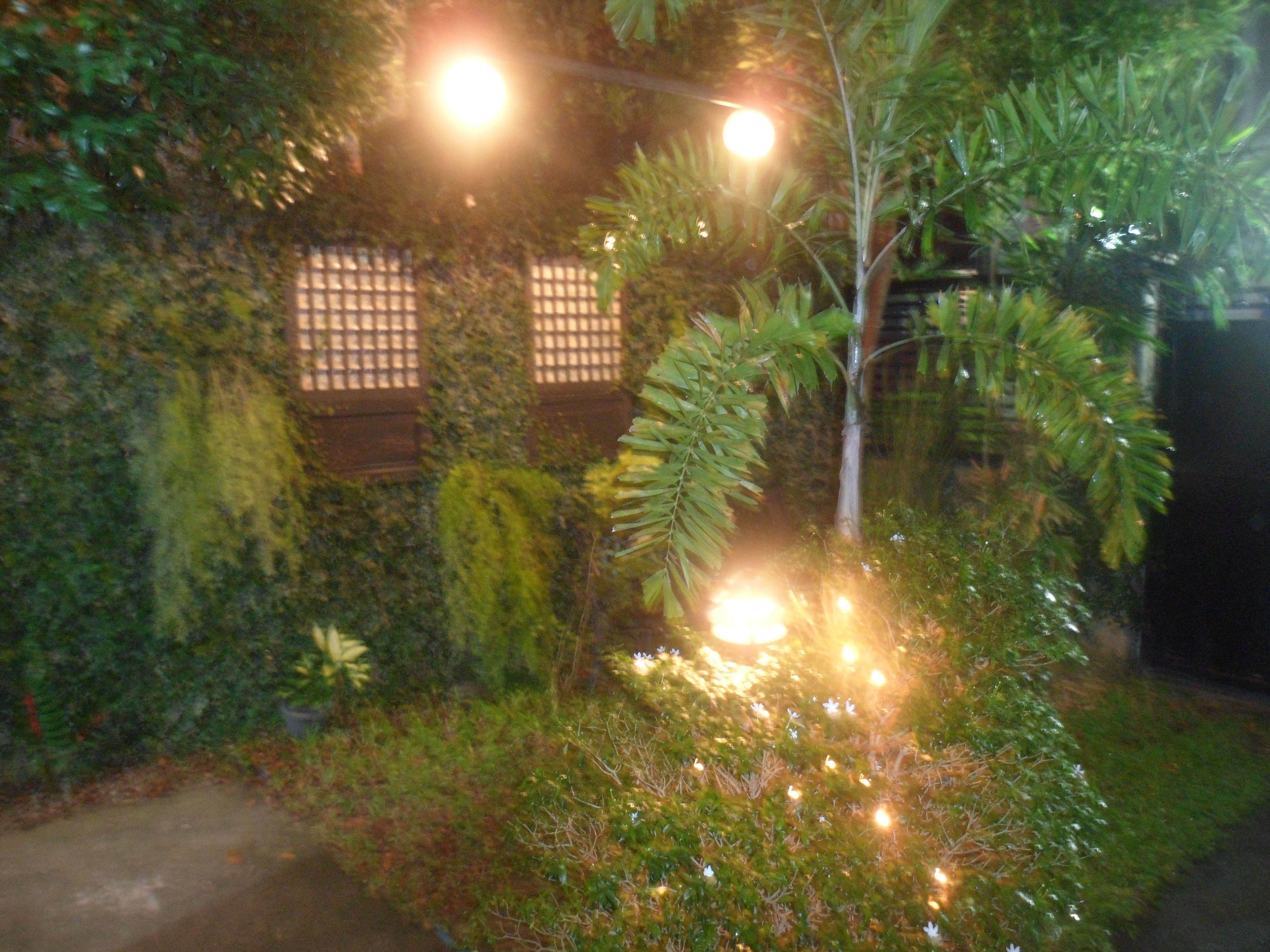 Night life in our little garden. | My Garden | Pinterest | Night life