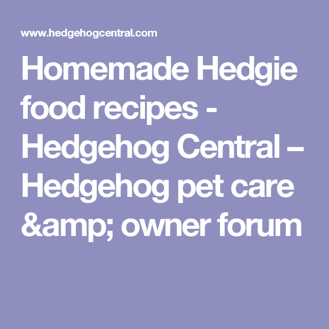 Homemade Hedgie Food Recipes Hedgehog Central Hedgehog Pet Care Amp Owner Forum Hedgehogs Pet Care Hedgehog Pet Hedgehog Food