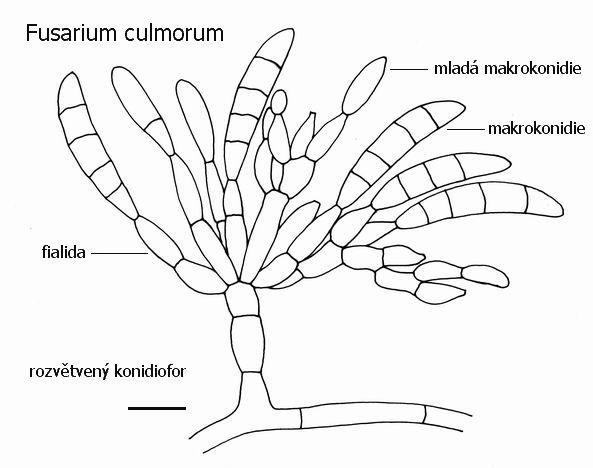 Miniatlas Mikroorganismu