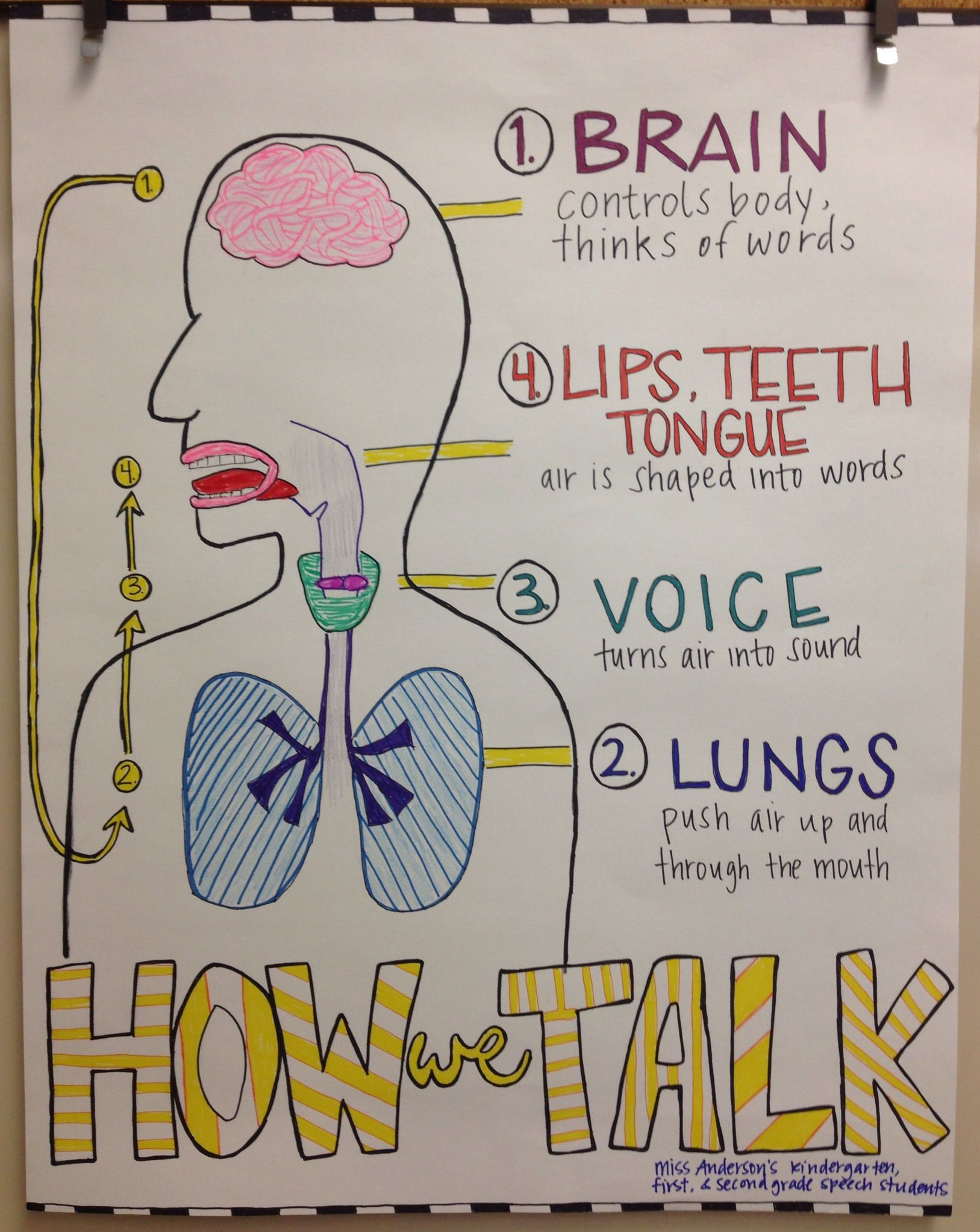 My Friend Sara Made This Science Poster Anatomy Of Speech