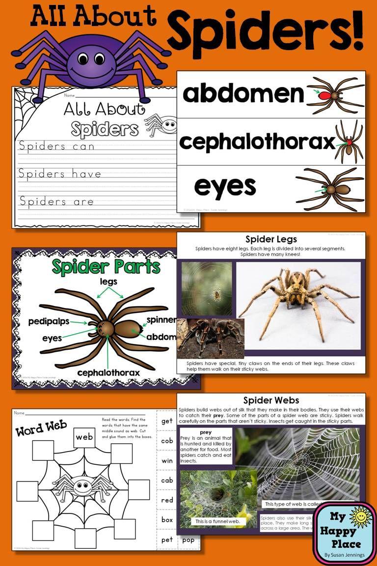 Spiders Unit Powerpoint And Printables Non Fiction Halloween Preschool Thematic Units Halloween Crafts Preschool [ 1152 x 768 Pixel ]