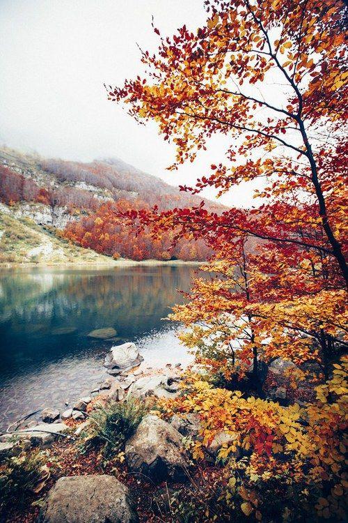 Autumn Nature And Tree Image Nature Landscape Nature Photography