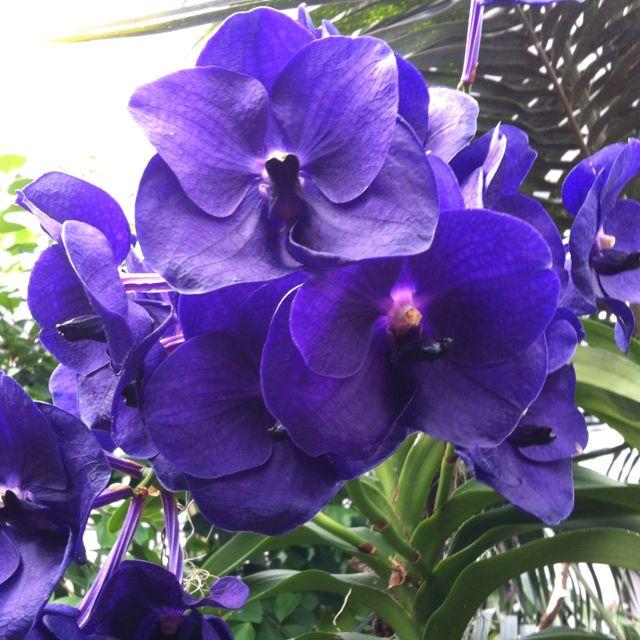 Orchidee auf der Insel Mainau