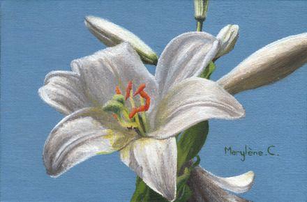 huile sur toile non encadr e fleur de lys blanche sur fond bleu ciel peinture par savousepate. Black Bedroom Furniture Sets. Home Design Ideas