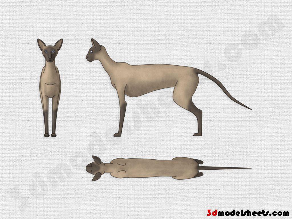Siamese+cat.jpg (1024×768)