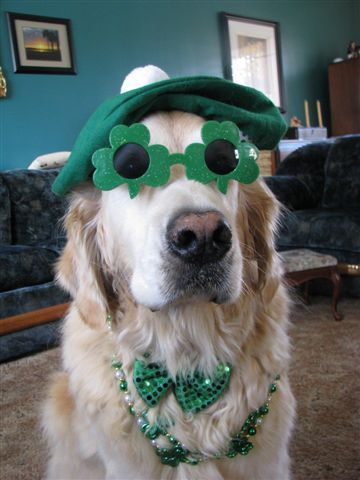 Pin By All Things Holiday On St Patrick S Puppies With Images