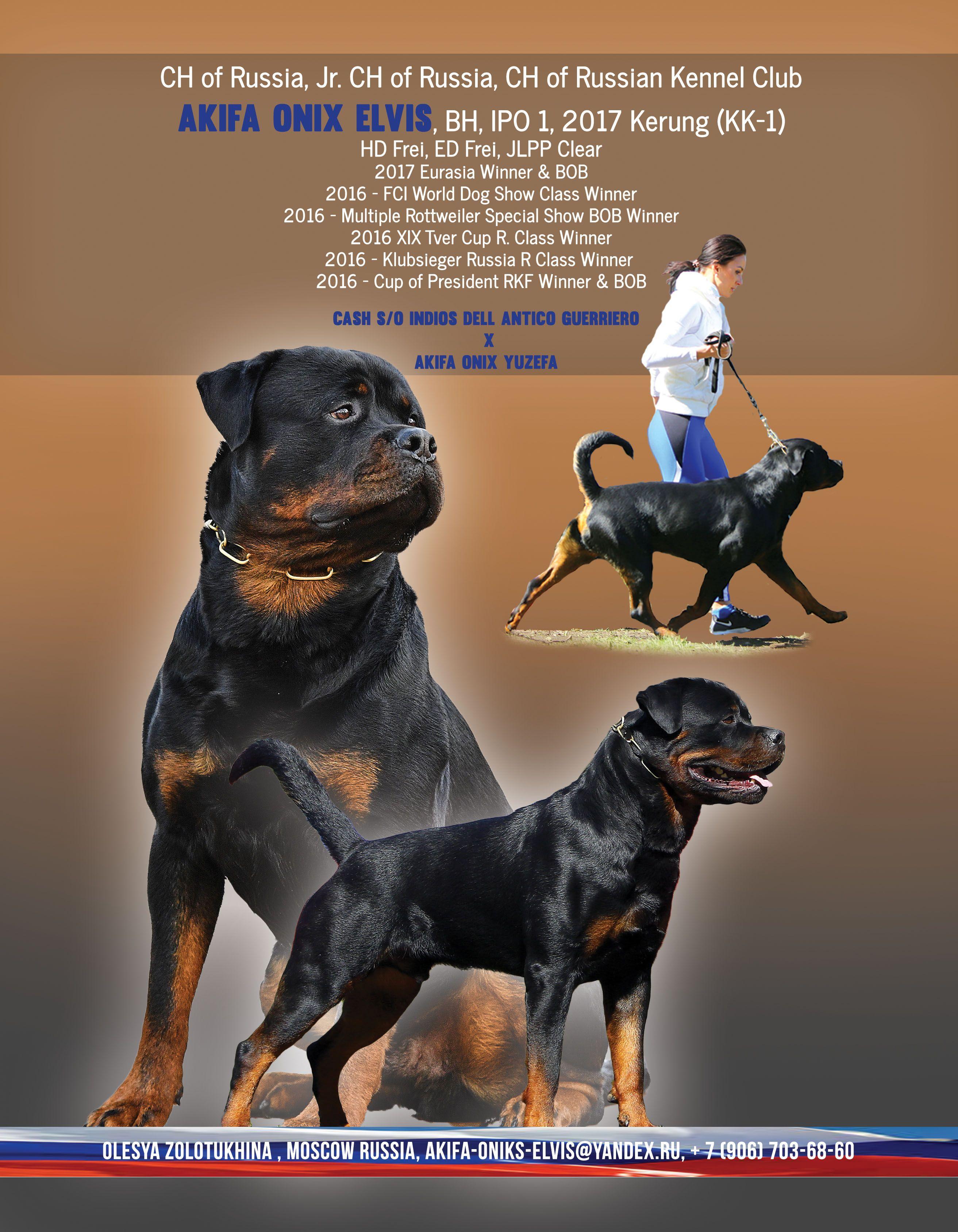 Ch Of Russia Jr Ch Of Russia Ch Of Russian Kennel Club Akifa