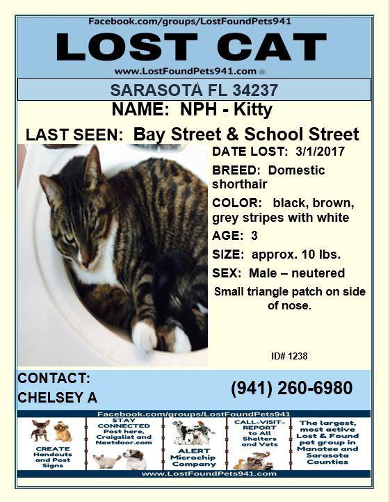 Kitty Lost Cat Lost Cat Missing Tabby Sarasota Fl