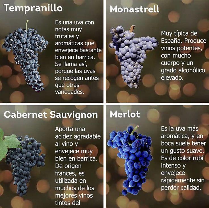 Pictures Of Wine Grapes Uvas Para Vino Vinos Y Quesos Cata De Vinos