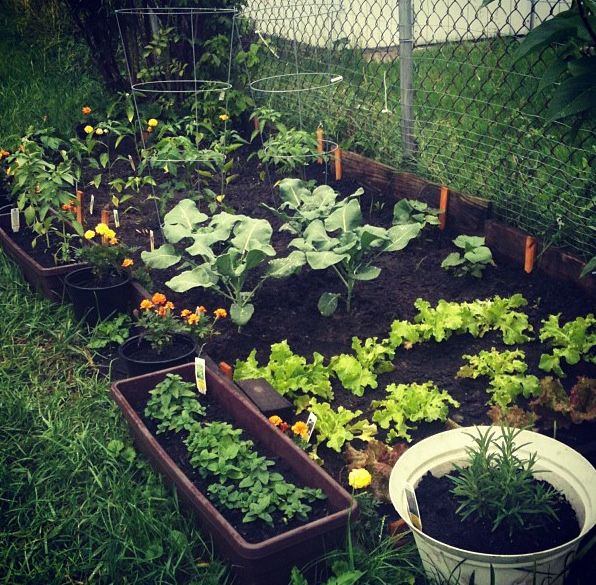 Small Home Garden Pictures, Photos, And Images For Facebook, Tumblr,  Pinterest,