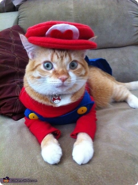 Quatang Gallery- Super Mario Chat Deguisement Pour Chat Chat Halloween Deguisement Chien Chat