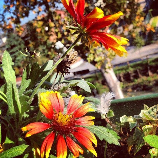 Thanks for Sun #flowers #fiori #colori #fotografie #inverno