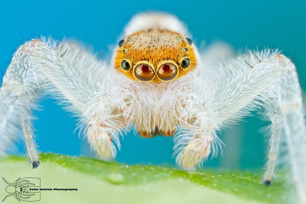 Cool Spider Araignee Animaux Mygale