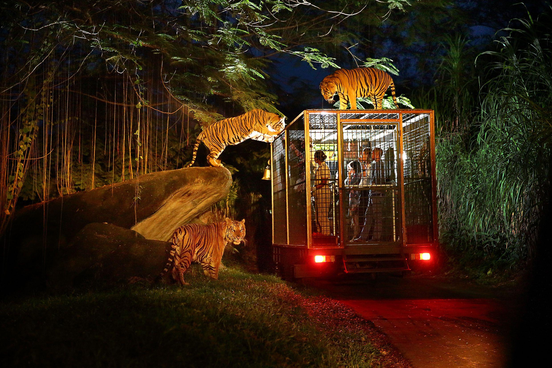 Night Safari Bali Activities Bali Holidays Safari