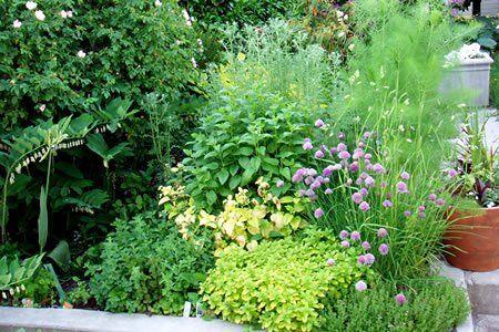 Chives, fennel, thyme, oregano, lemon balm, all perennial