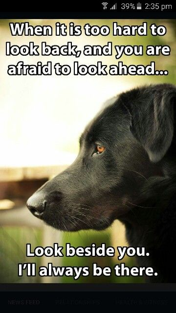 Kramer Dogs Pinterest Dogs Puppies And Dog Love Beauteous I Love My Dog Quotes