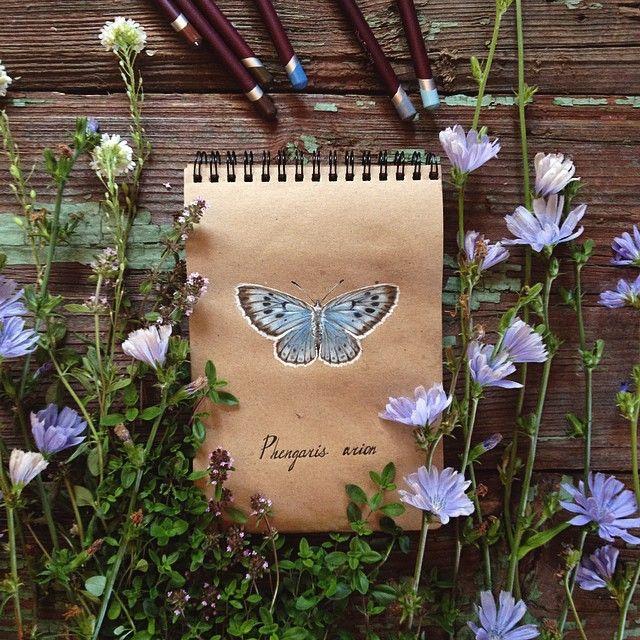 #butterfly #topcreator