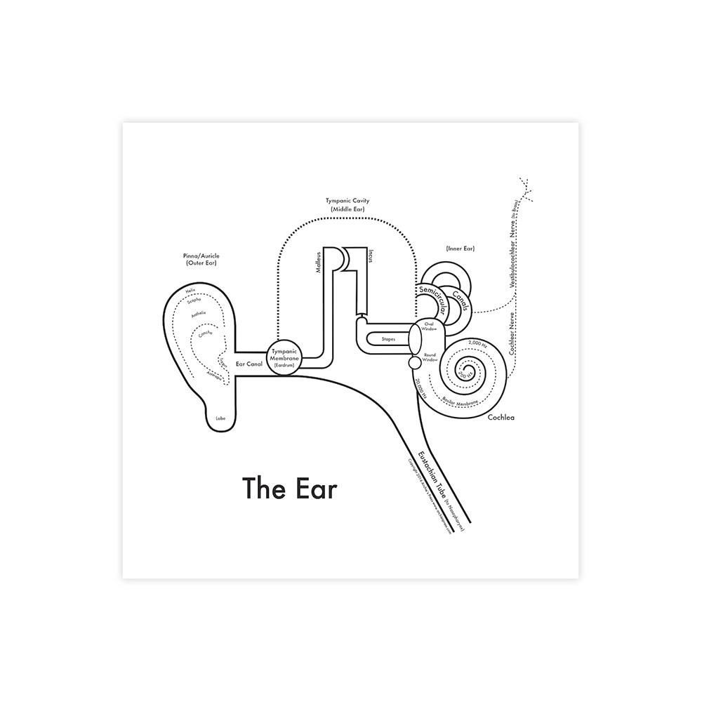 The Ear Anatomy Print | Ear anatomy and Anatomy