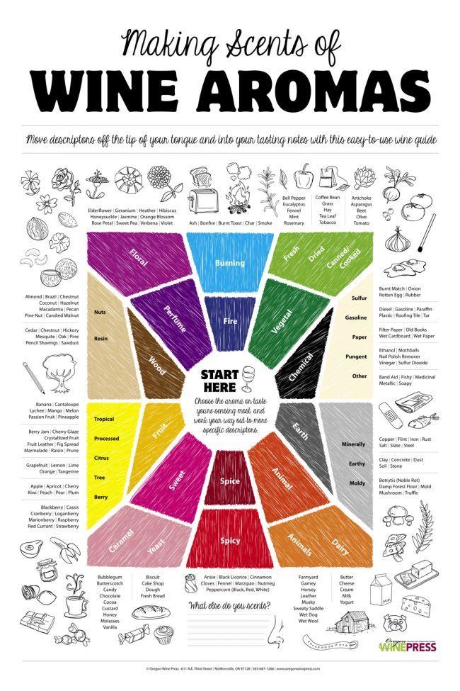 Making Scents of Wine | Graphic Design | Wine guide, Wine
