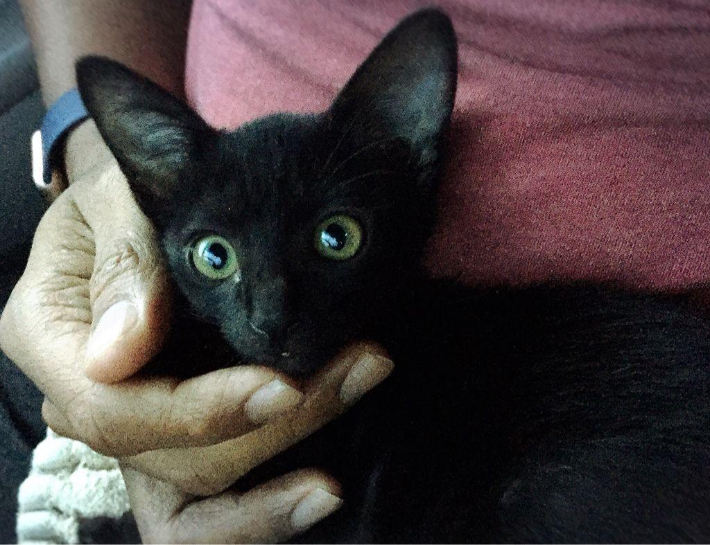 Toto Cat Pawshake Met Afbeeldingen