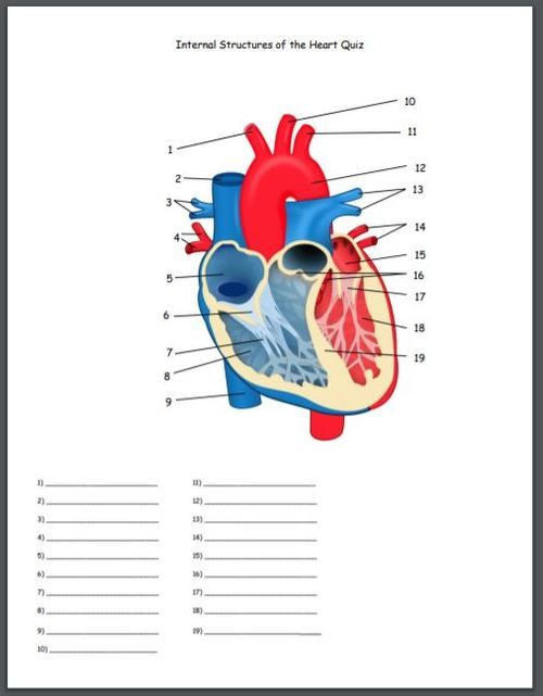 Internal Structures of the Heart Quiz   Heart structure ...