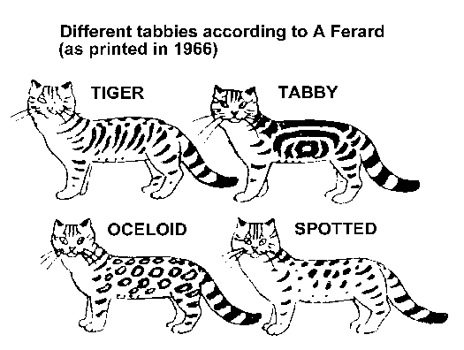 STRIPED, SPOTTED AND TICKED CATS Spotted cat, Cat colors