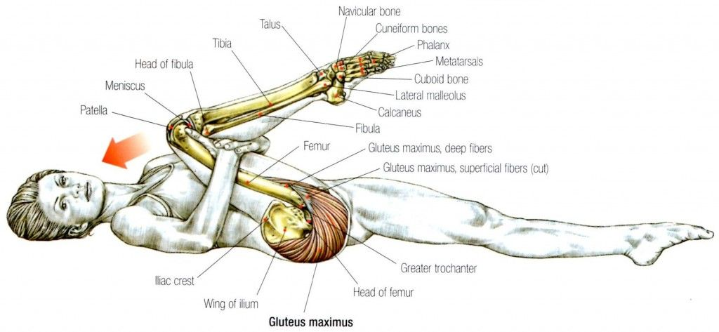 Stretching: How to Stretch the Gluteus Maximus #exercise #health ...