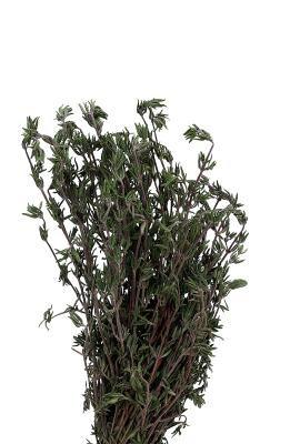 Mi planta de romero se está tornando marrón y muriendo   eHow en Español