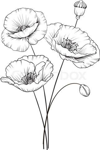 Kotkoa Fotos Illustrationen Und Video Colourbox De In 2020 Blumenzeichnungen Zeichnungen Illustration