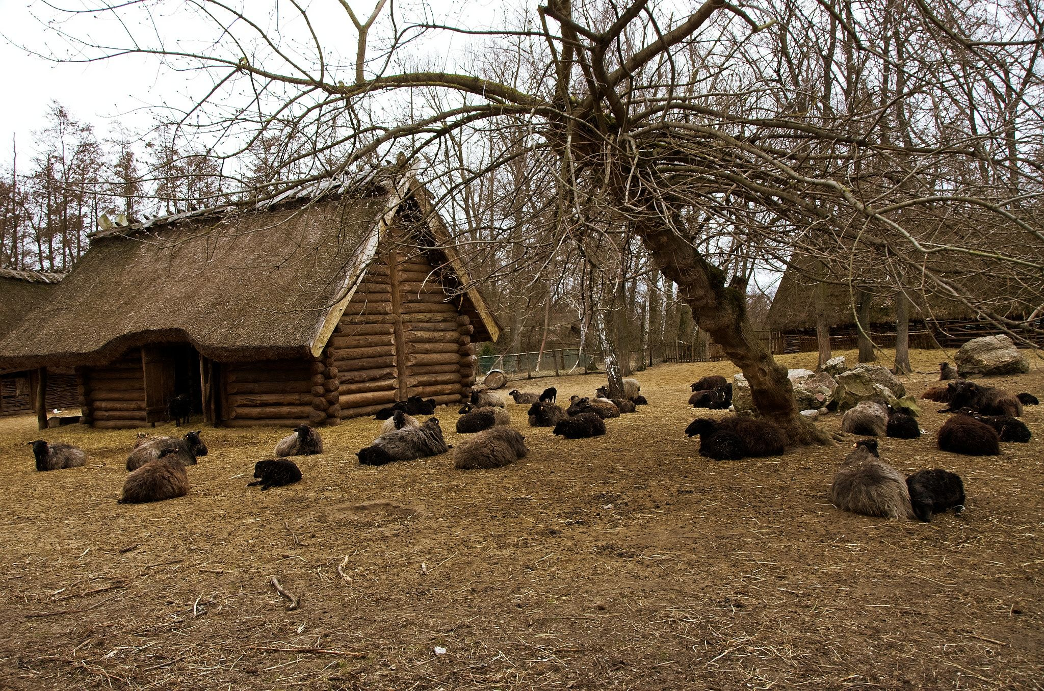 In a prehistoric Slavic village Poland The settlement at