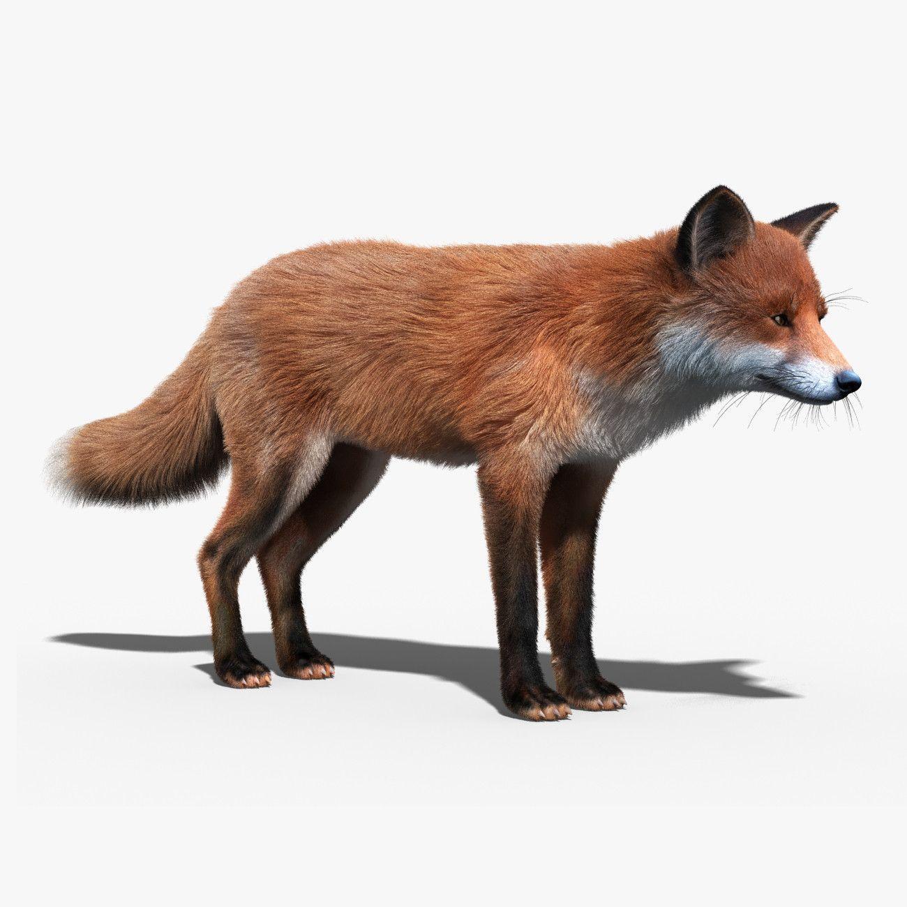 12++ List of 3d google animals ideas